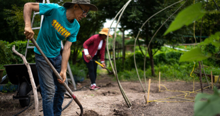Community gardens help Bronxites regroup after pandemic